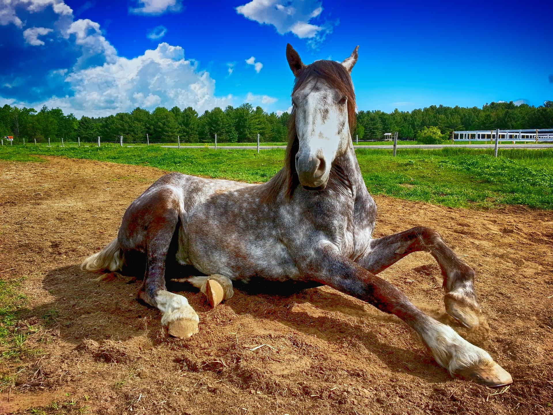 Teruggeven gekocht paard?